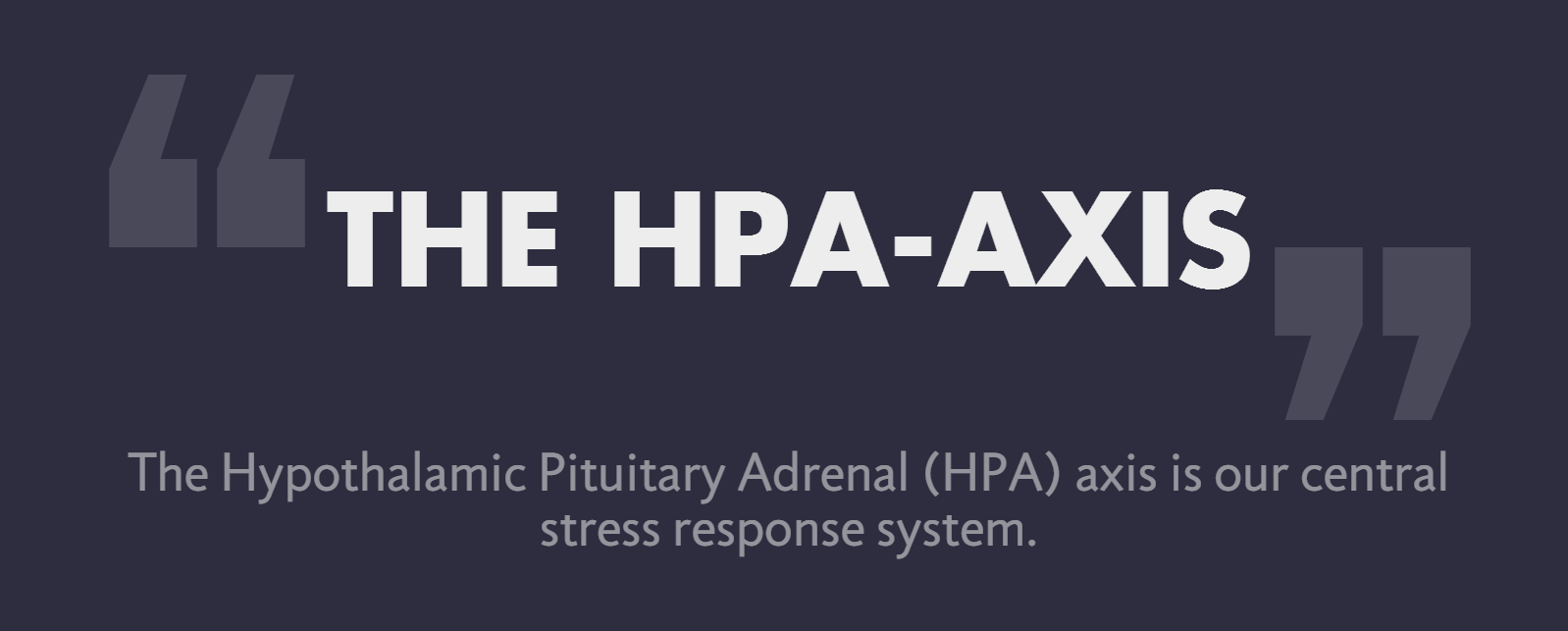 The HPA-Axis